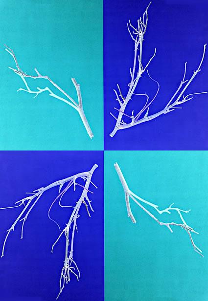 33_twigs