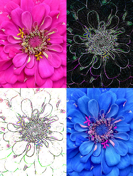 70flowerAbstracts