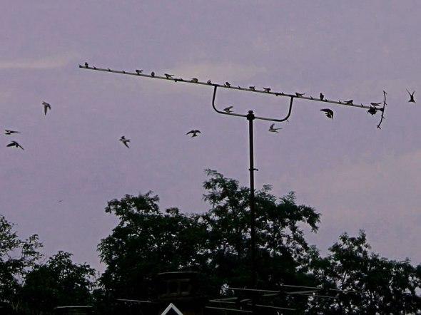 019birds1