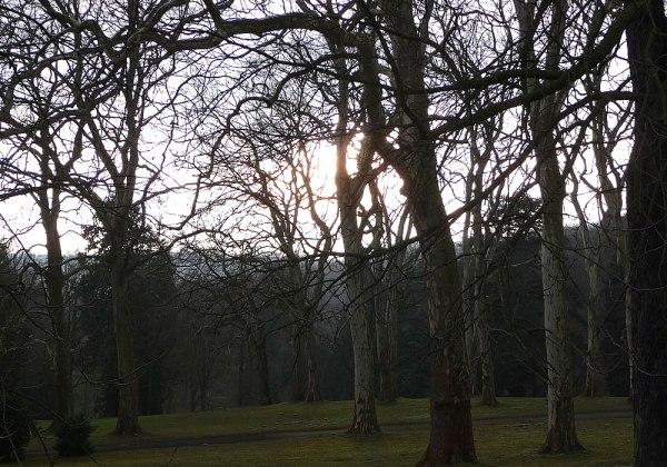 in_between_trees