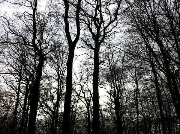 january_1_trees