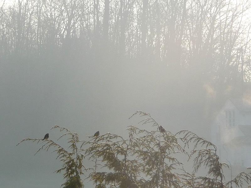 morning_birds