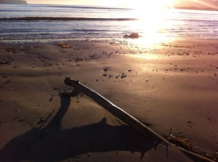0mallorca_driftwood
