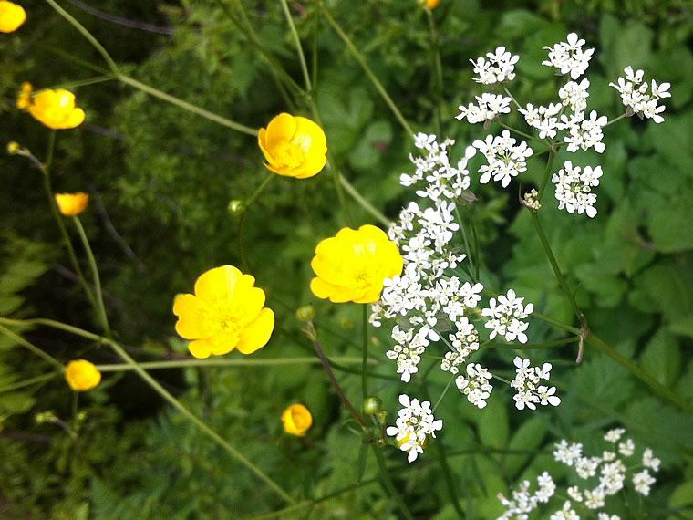 bilder_blog_fresh_flower