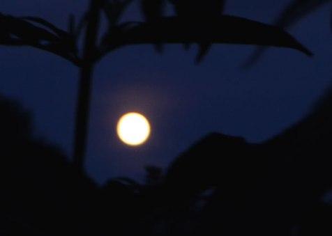 bilder_08_moon12