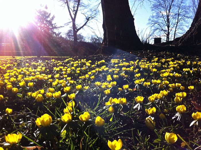 photo_yellow