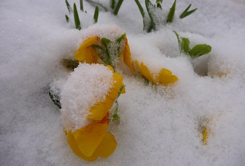 photo_snowmarch10