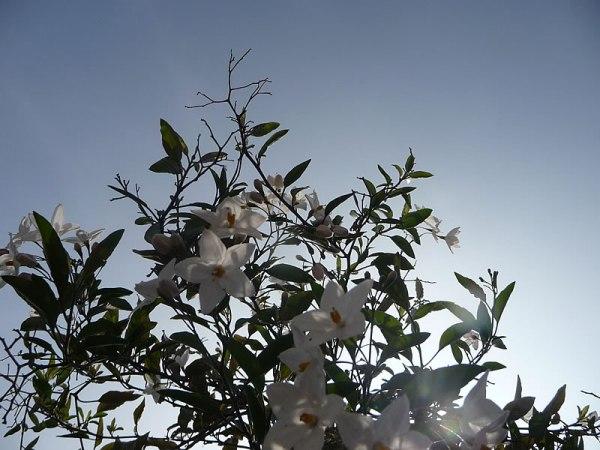 sept_flower