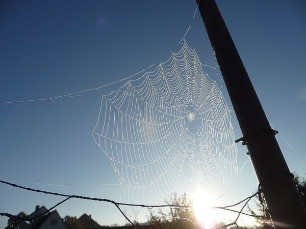 metal_spider
