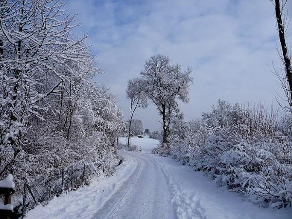 snow_jan2010