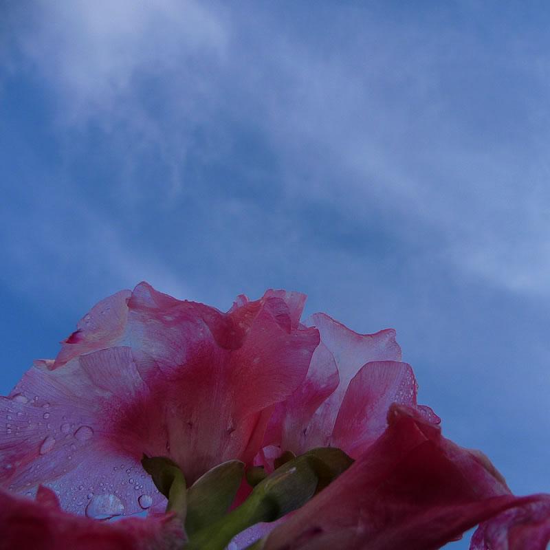 last-summer-flower