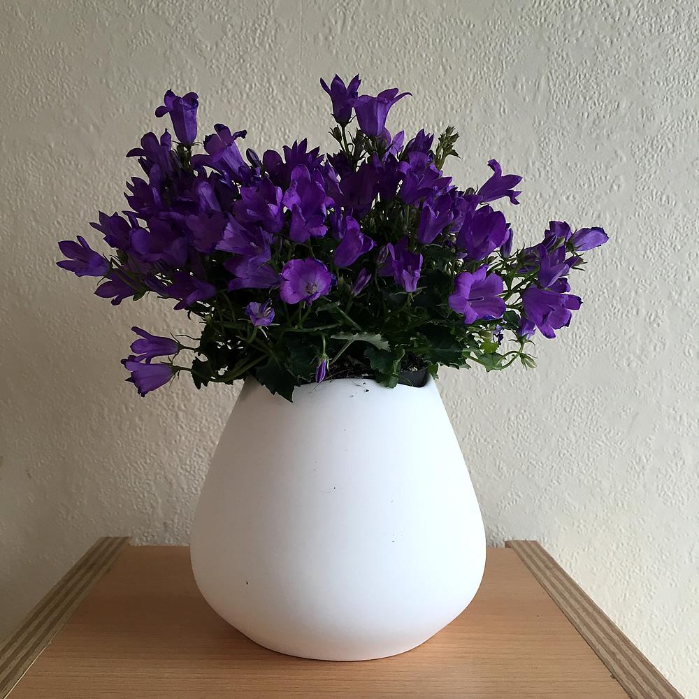 nature4-lilacs