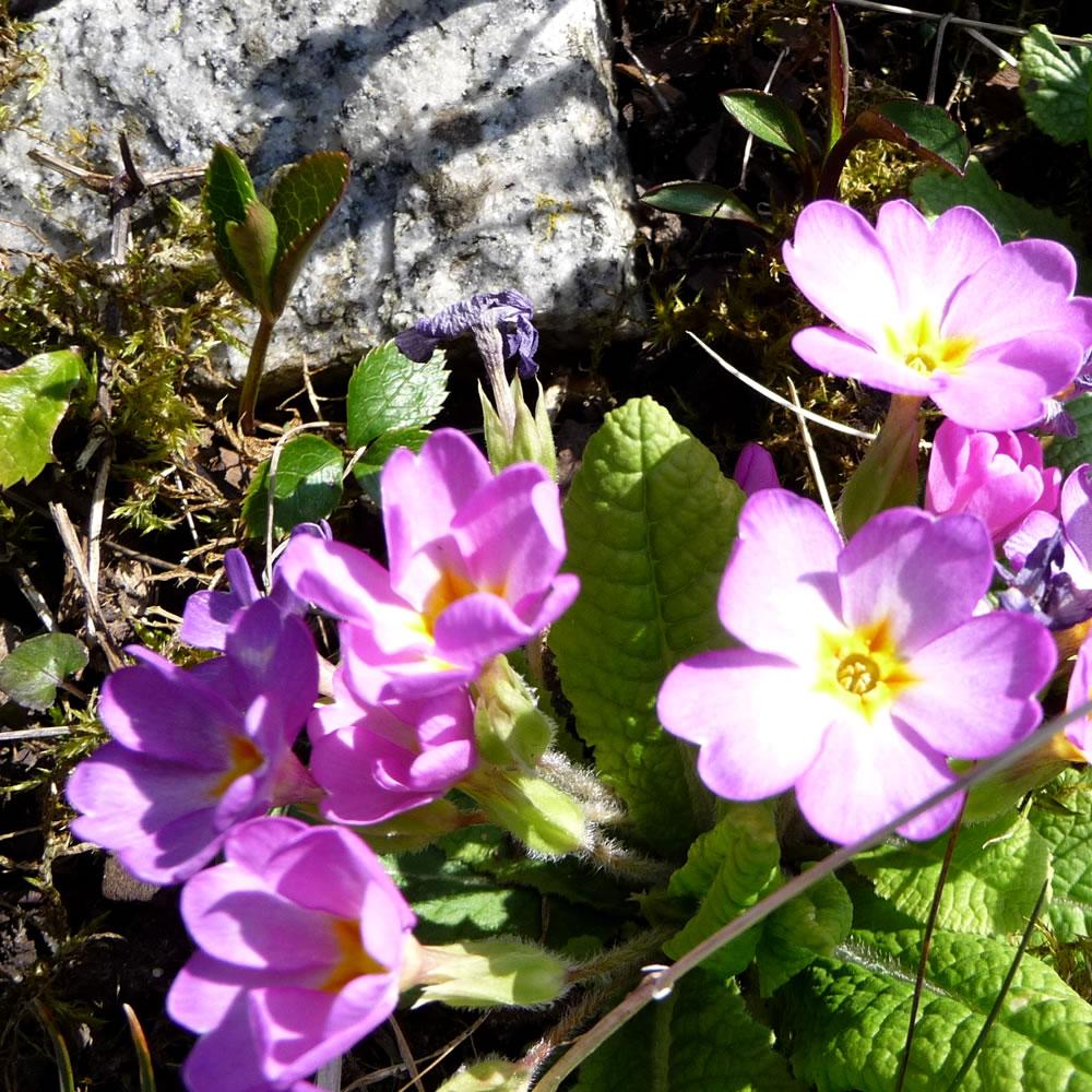 photo-spring3