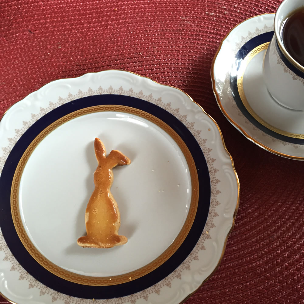 photo-bunny