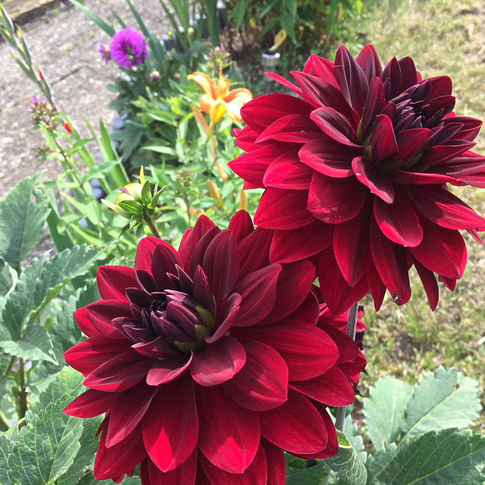garden-july