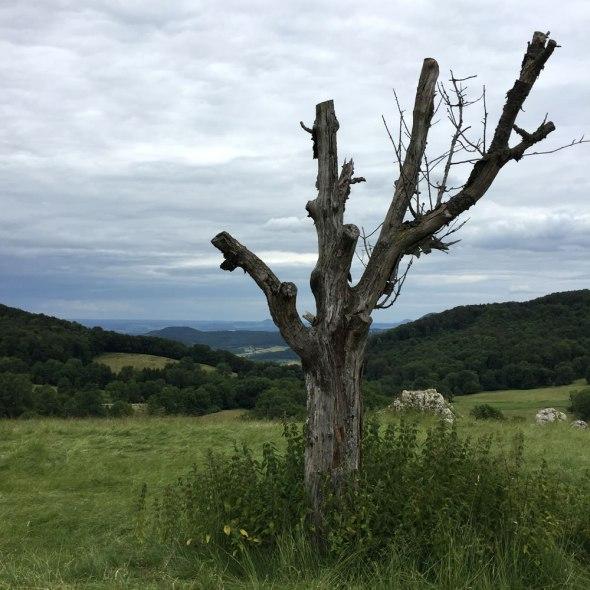 tree-alb